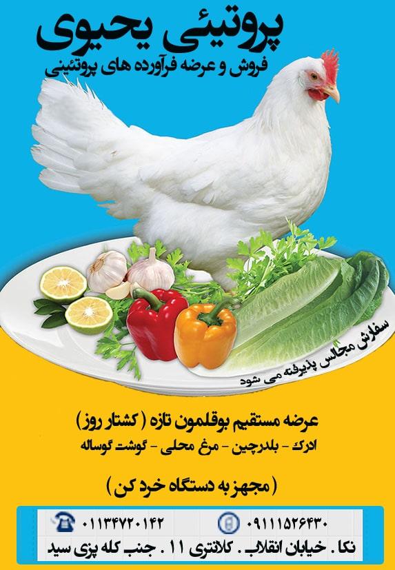 پوستر مغازه پروتئینی یحیوی